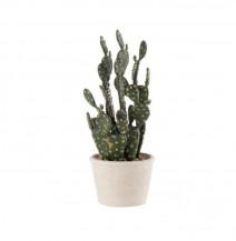 Dekorační kaktus Prickly pear